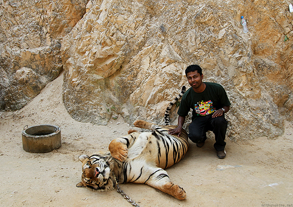 Me with one of the tigers at the Tiger Temple
