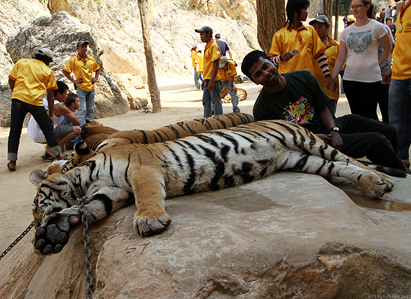 Me trying to lie down with the tigers
