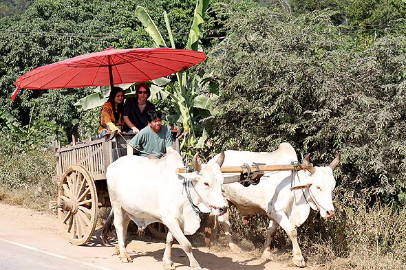 Ox cart ride at Maesa Elephant Camp