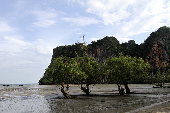 Railay East trees