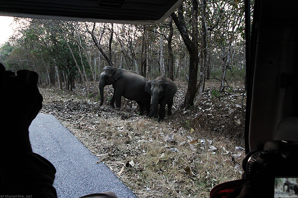 Bandipur forest elephants