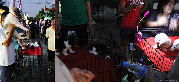 Chatuchak weekend market puppies
