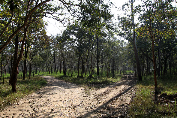 Muthanga forest safari trail two-way