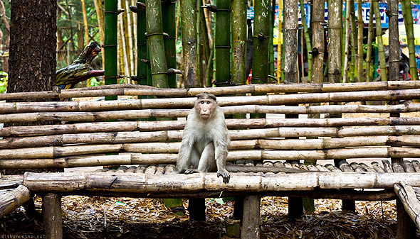 Nisargadhama monkey bench