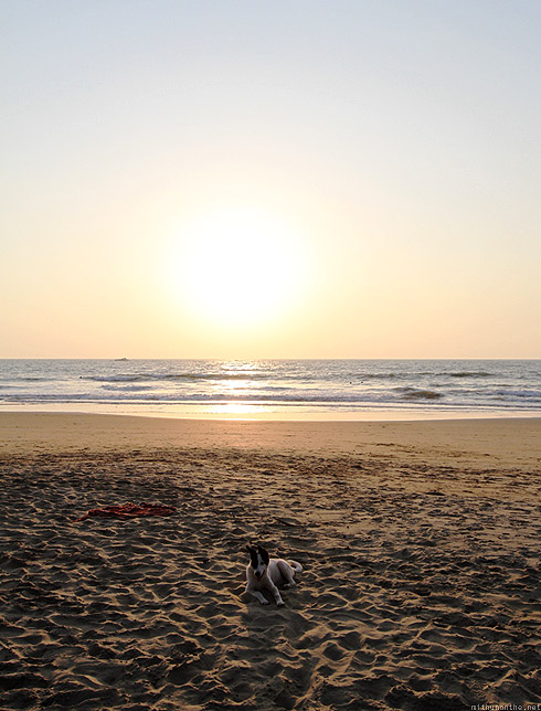 Kudle beach dog Gokarna sunset