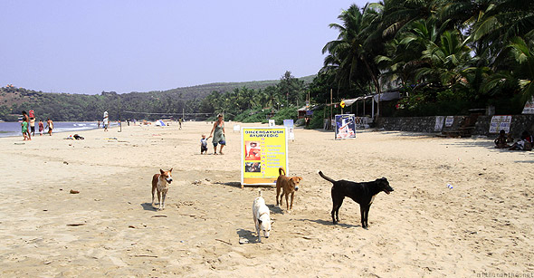 Kudle beach sign dogs