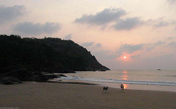 Kudle beach sunset dogs