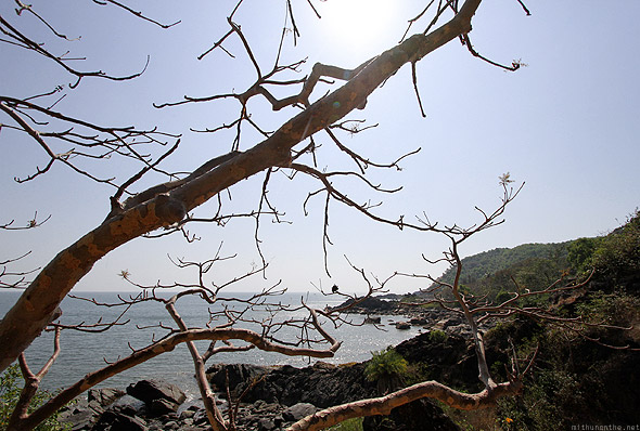 Paradise beach Gokarna trek tree branches