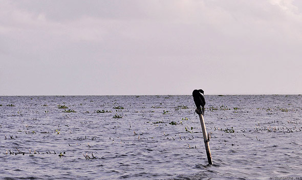 Kumarakom Vembanad lake birds pole