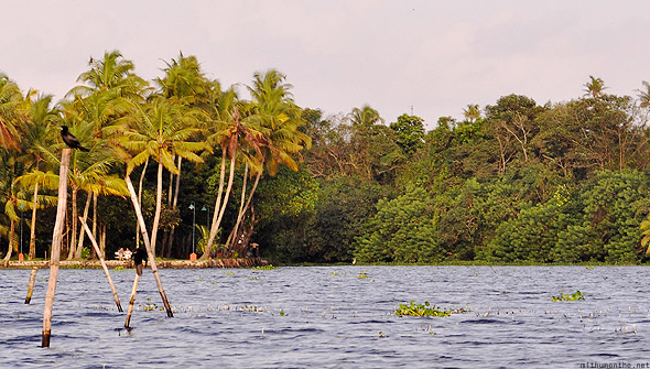 Kumarakom Vembanad lake birds