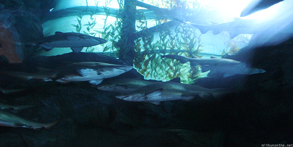 Dubai Mall Aquarium baby sharks