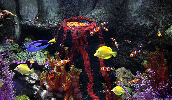 Dubai Mall Aquarium clown fish volcano