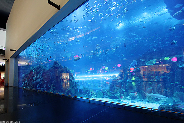 Dubai Mall Aquarium glass