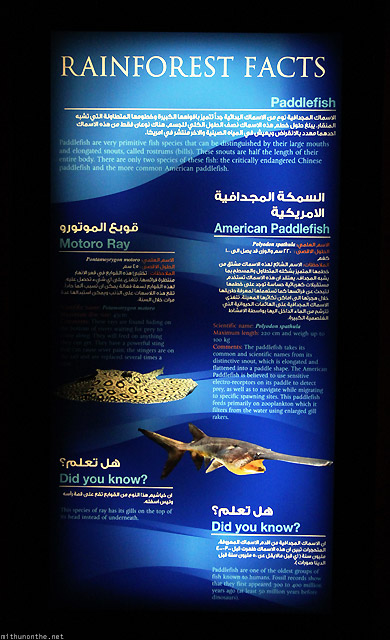 Dubai Mall Aquarium rainforest facts