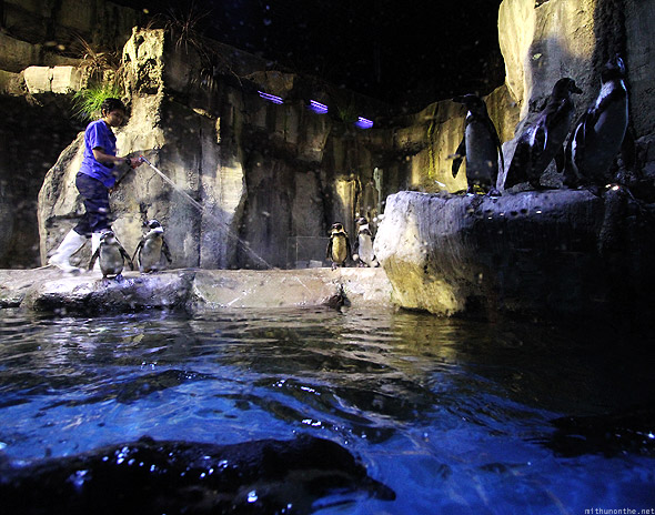 Dubai Mall Aquarium underwater penguins worker