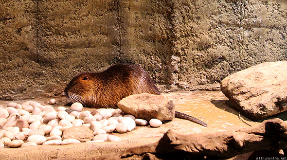 Dubai Mall Aquarium underwater zoo water rat