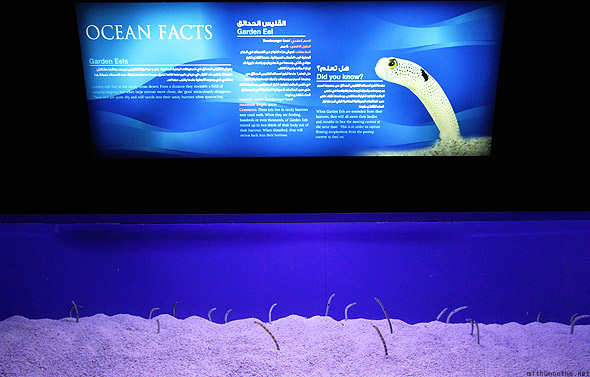 Dubai Mall Aquarium underwater zoo garden eels