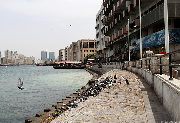 Bur Dubai creek morning pigeons
