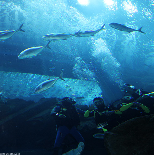 Dubai Aquarium divers working