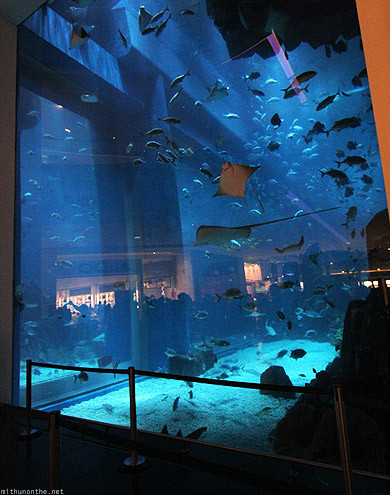 Dubai Aquarium from entrance outside glass