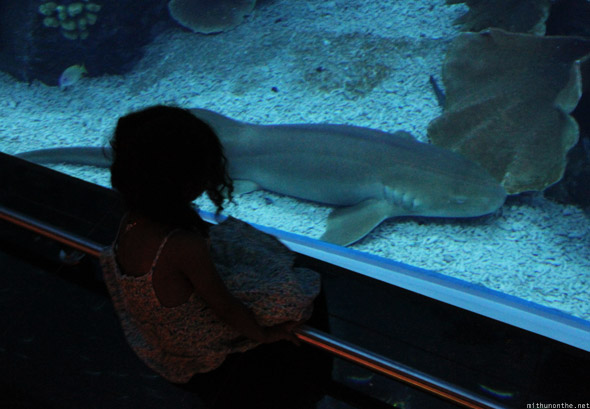 Dubai Aquarium little girl baby shark