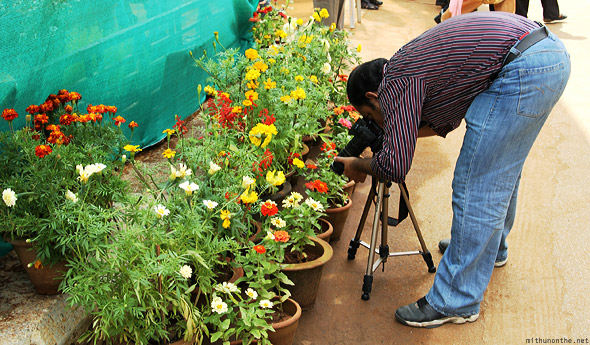 Bangalore Lal Bagh flower show macro photographer