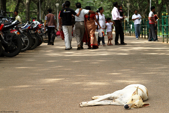 Bangalore Lal Bagh flower show sleeping dog