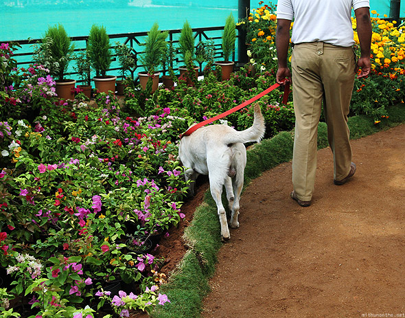 Bangalore Lal Bagh flower show sniffing dog