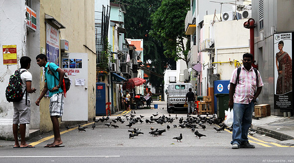 Singapore Little India pigeons