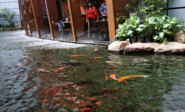 Suntec City golden fish pond