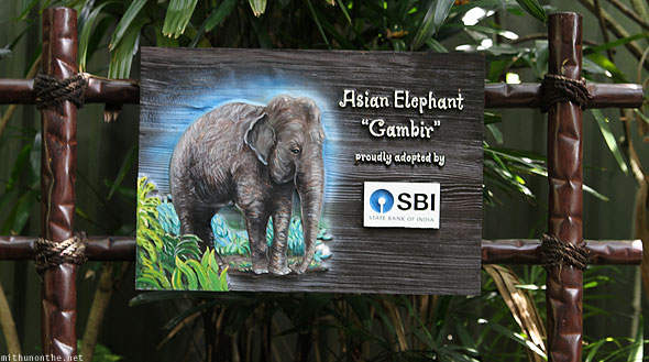 Singapore zoo Asian elephant SBI adopted