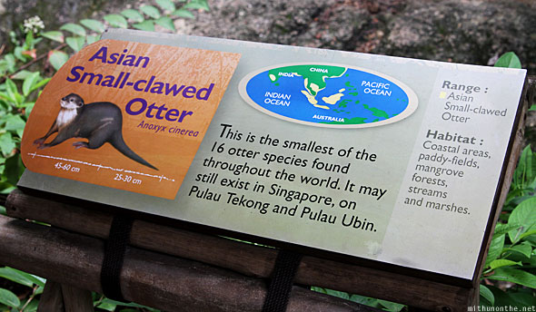 Singapore Zoo Asian small clawed otter info