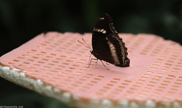 Singapore zoo butterfly