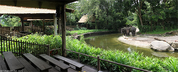 Singapore zoo elephant show panorama