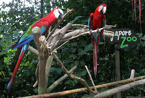 Singapore Zoo parrots at the entrance