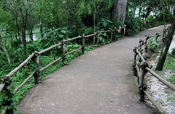 Singapore zoo path to kangaroos