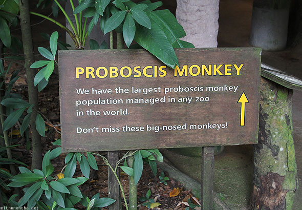 Singapore zoo proboscis monkeys sign