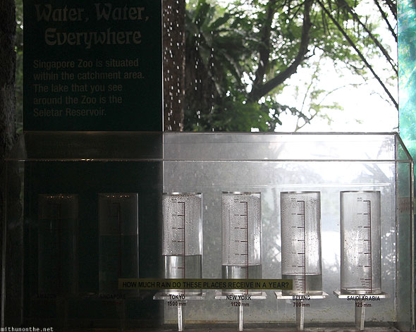 Singapore zoo rain water level comparison