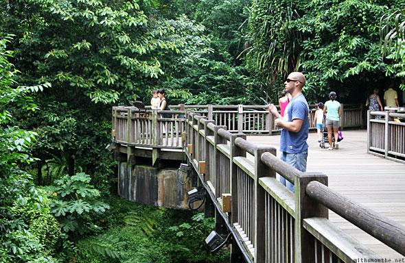 Singapore Zoo wooden bridge