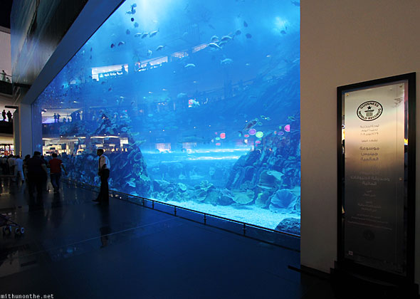 Dubai Mall aquarium world record