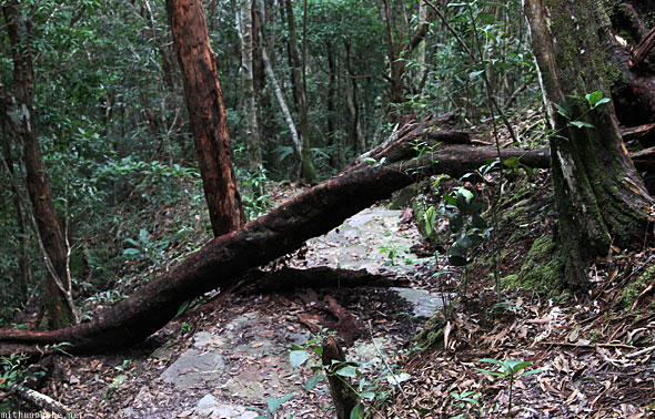 Langkawi geological park trekking path tree
