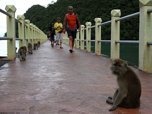 Langkawi Dayang Bunting monkey at pier entrance