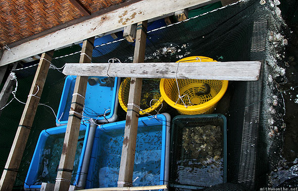 Langkawi fish feeding farm baskets