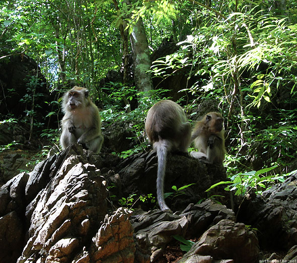 Langkawi Geoforest park monkeys on stones