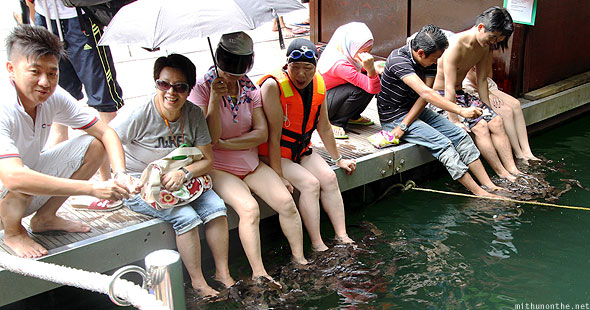 Langkawi Pregnant Maiden island lake tourists catfish spa