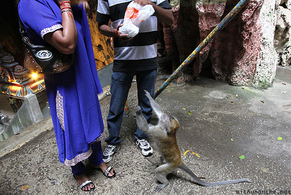 Batu Caves inside monkey begging food