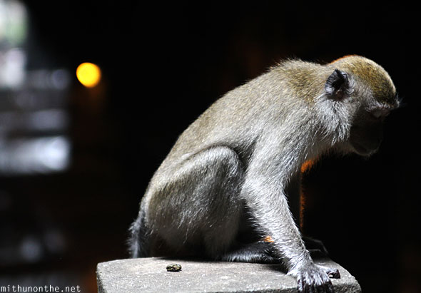 Batu Caves inside monkey praying eyes closed