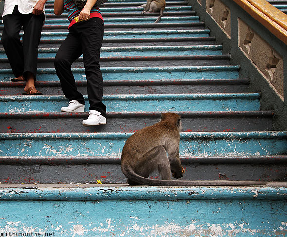 Batu Caves monkey by steps looking KL Malaysia