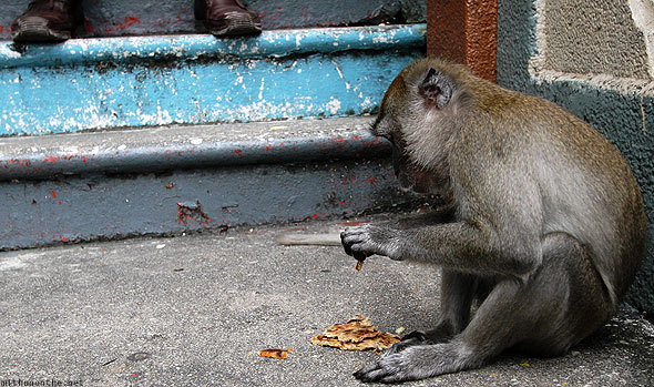 Batu Caves monkey on steps shoes