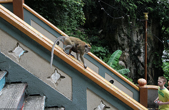 Batu Caves monkey steps Brazil tourist